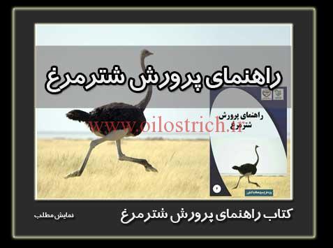 ostrich-book1